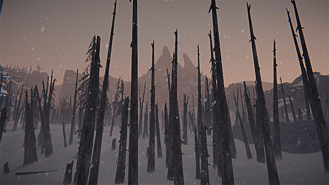 A burned out forest.